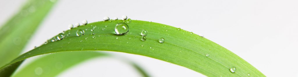 Drop on a grass like leaf showing how the need adjuvants to spread out and cover the leaf surface better