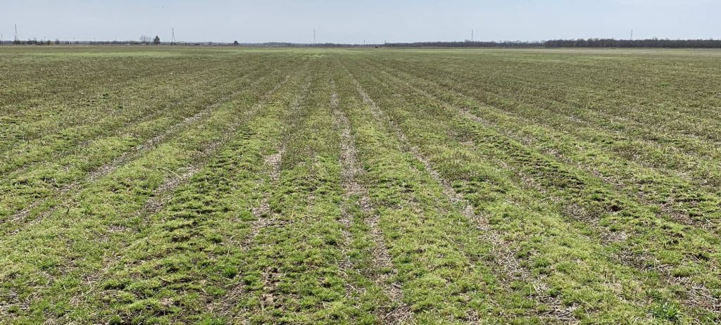Weed burndown strategy benefit from the right adjuvant choices
