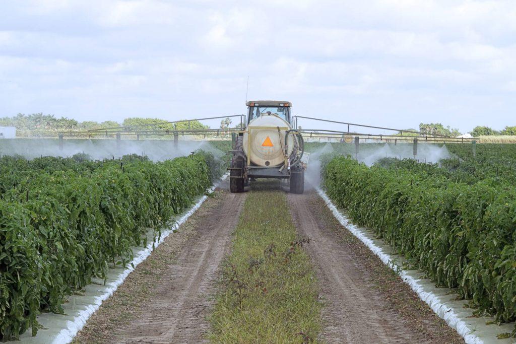 fungicide application on a tomato field