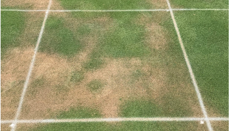 field A showing LDS on untreated turf