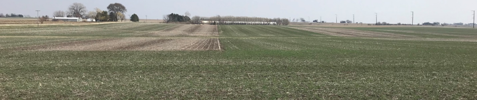 cover crop termination blog post