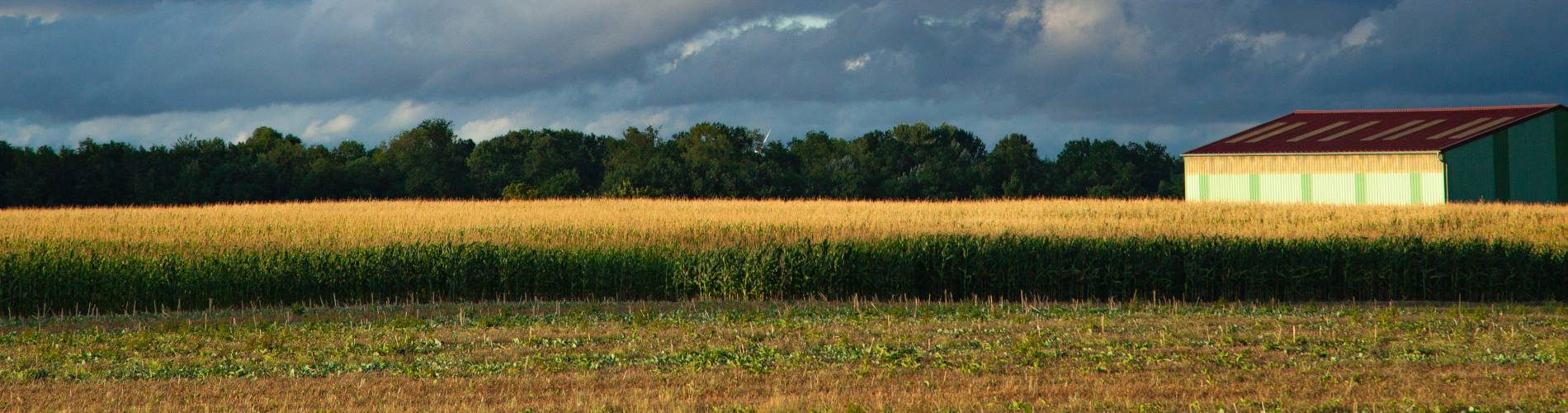 Fall applied herbicides
